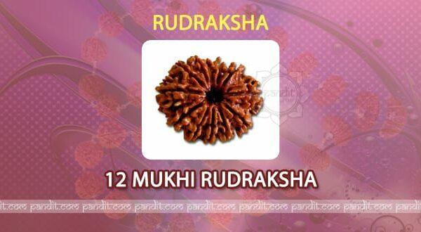 12 Mukhi Rudraksh