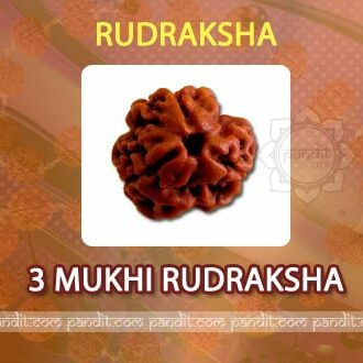 3 mukhi Rudraksh