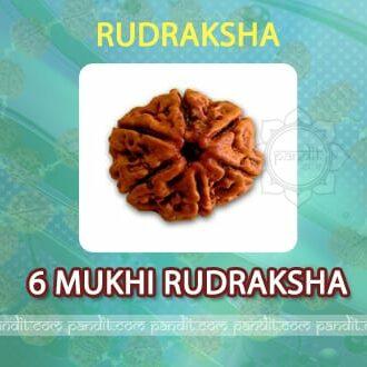 6 Mukhi Rudraksh