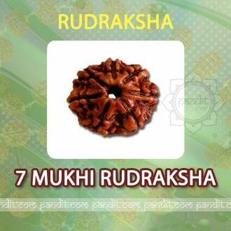 7 Mukhi Rudraksh