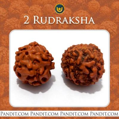 2 Rudraksha