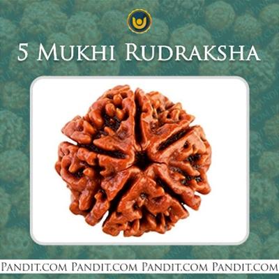 Five Faced Rudraksha - 5 Mukhi Rudraksha