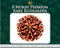 8 Mukhi Premium Rare Rudraksha